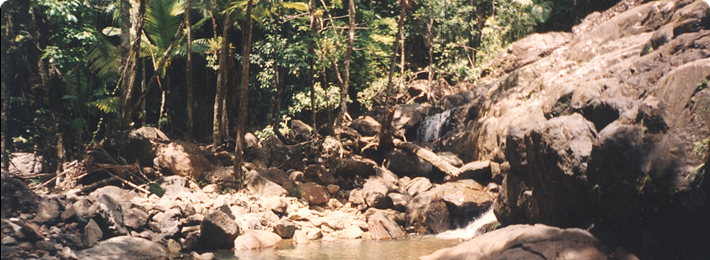 Luquillo LTER and Experimental Forest - Quebrada Sonadora