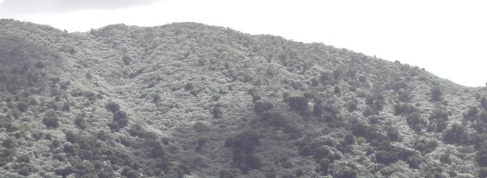 Luquillo LTER and Experimental Forest - aerial view