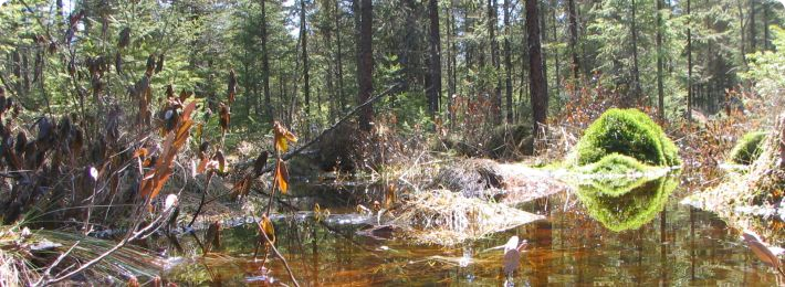 Marcell Experimental Forest - Bog at S1