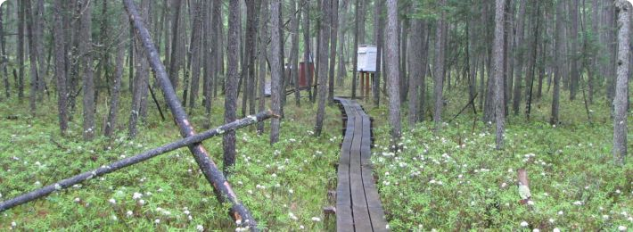 Marcell Experimental Forest - Bog at S2